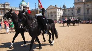 horseguardchange