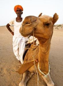 camel-trekking-indian-desert