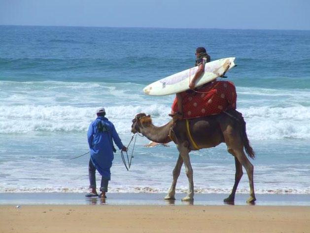 Surf_Maroc_Camel