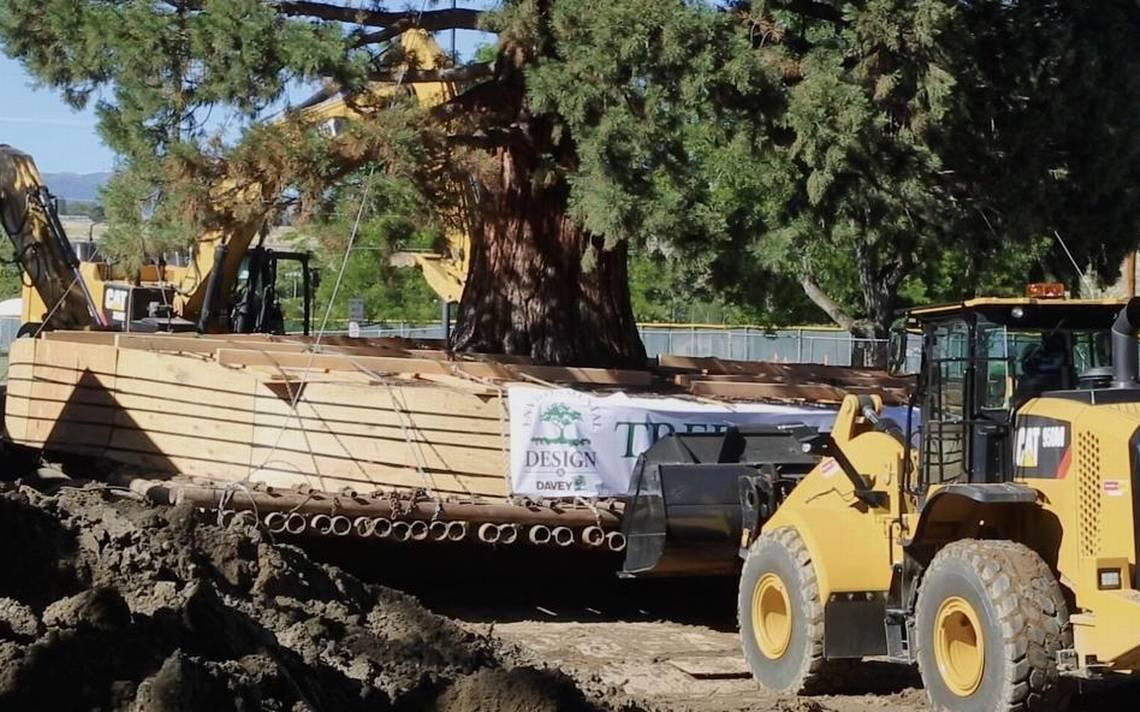 moving sequoia